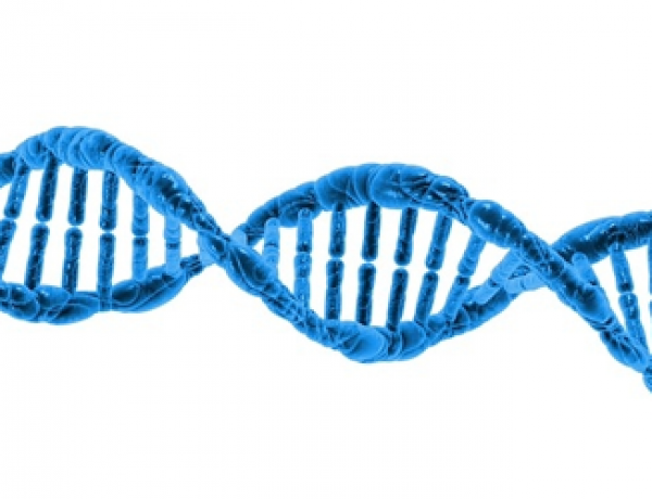 'Supercoiled' DNA Is Far More Dynamic Than Double-Helix, Study Finds