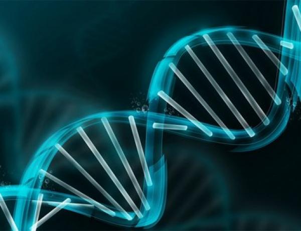 3-D imaging improves understanding of supercoiled DNA