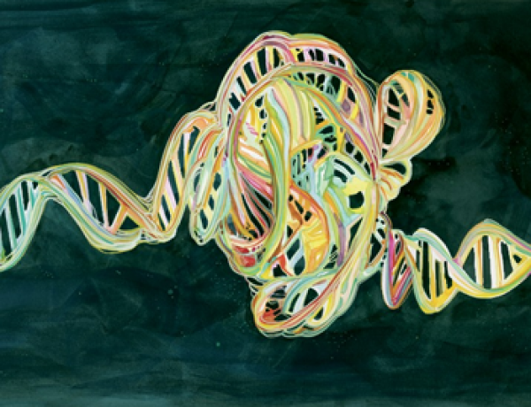 How Strange Twists in DNA Orchestrate Life